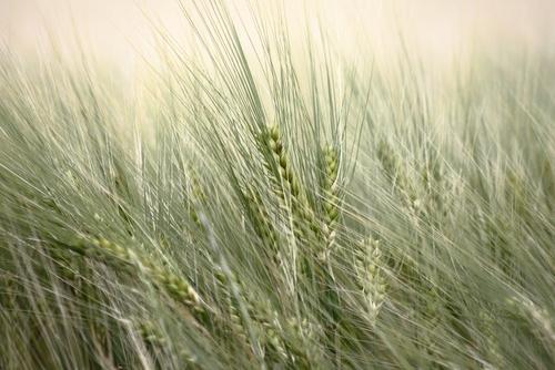 Allianz und Deutsche Bank halten an Agrarwetten fest