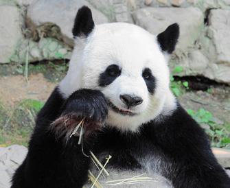 Das Gleichnis vom Banker und Pandabär
